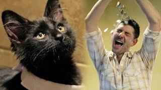Adopting A Black Cat Brings Good Luck