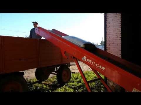 Cinta transportadora plana Bec-Car año 2007, moviendo bolsas