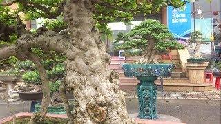 Xuất hiện cây LẠ NHẤT triển lãm, báo giá những cây đẳng cấp - wonderful bonsai at bonsai exhibition
