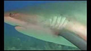 サメ -真実2-