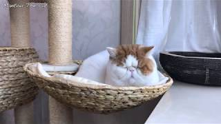 Sleeping Cat and Relaxing Guitar Music