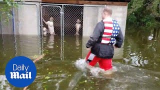 Incredible moment six dogs are rescued hurricane Florence flooding
