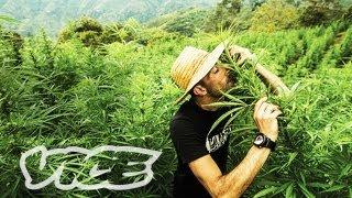 Kings Of Cannabis [Full Length Documentary]
