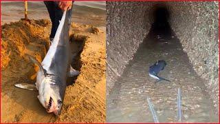 Catching Seafood 🦐🦀 Deep Sea Octopus (Catch Crab, Catch Fish) - Tik Tok #4