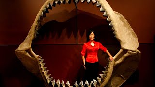 The Truth Behind Megalodon Sharks That Inspire 'The Meg' Movie