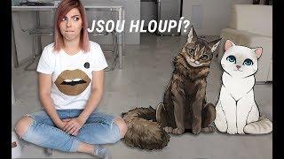 GetTheLouk - Testuju Kočíčí IQ | Mám doma hloupé kočky? - Zdroj: