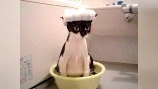 FUNNIEST ANIMALS EVER! - You will LAUGH AT EVERY SINGLE VIDEO! - YouTube