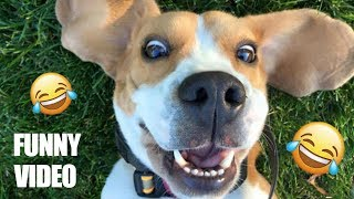 Try Not To Laugh Challenge - Funny Dogs  Compilation