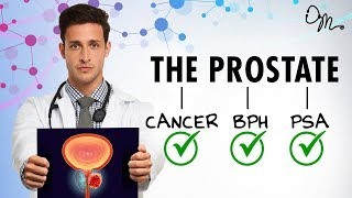 WHAT IS THE PROSTATE? | BPH + Cancer + PSA + More! | Doctor Mike