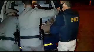 PRF, BM e PATRAM resgatam puma atropelado na BR-116, em Vacaria