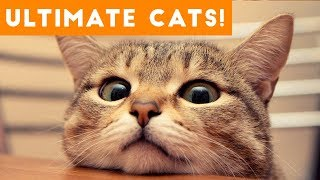 Ultimate FUNNY CAT and KITTEN Compilation of 2017 | Funny Pet Videos