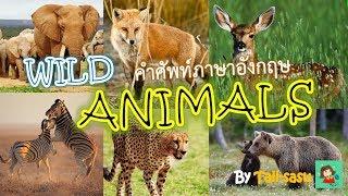 Wild Animals l สัตว์ป่า l คำศัพท์ภาษาอังกฤษ