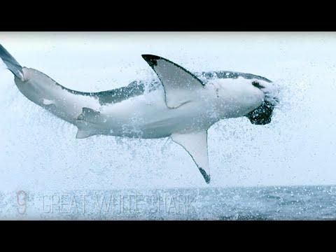Uzbudljivi život u okeanu