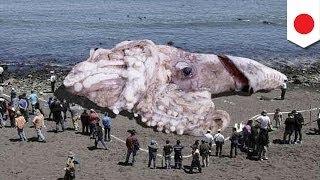 偽物の巨大イカ