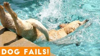 Funniest Dog Fail Compilation 2018 | Funny Pet Videos - YouTube