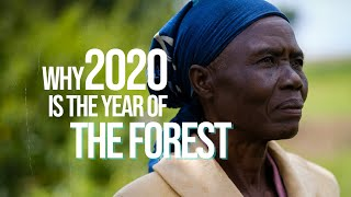 Why 2020 will be the Year of The Forests | New Years Resolution