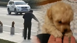 5 Smallest Dogs You Won't Believe Actually Exist!