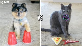 /dog vs cat iq test who is smarter