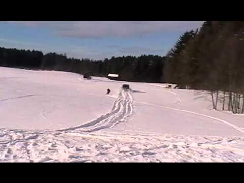 Niva-Skijöring 2010