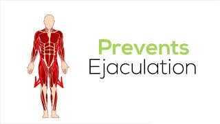 4 Steps To Cure PE- Premature Ejaculation Once for All.