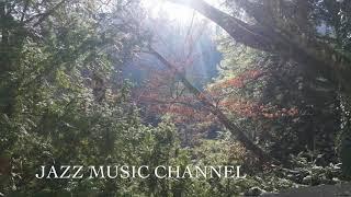 【Morning Jazz BGM】for coffee,relaxing,breakfast,reading,朝ジャズ,guitar instrumental