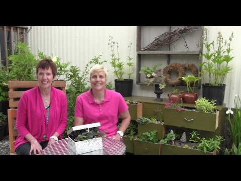 Episode 121-Whimsical and Fun Container Plantings