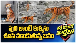 Stray dog found painted to look like Tiger..