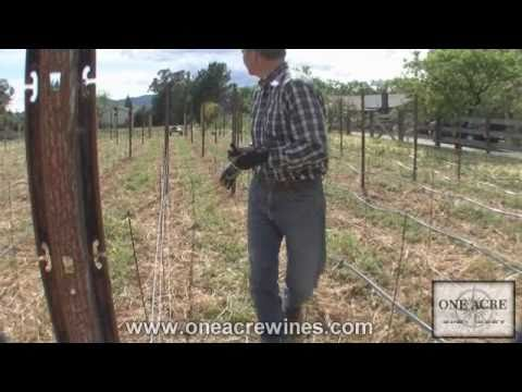 One Acre Napa Valley - Yountville AVA Episode 4  - Trellising