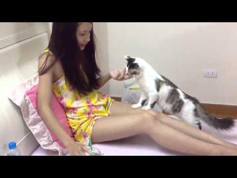 Đôi khi mình chỉ muốn là một con mèo vô tư không lo nghĩ...