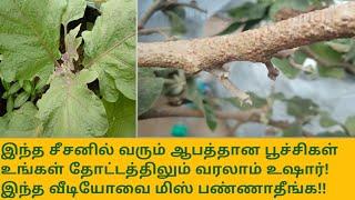 இந்த சீசனில் வரும் மிகப்பெரிய ஆபத்தான பூச்சிகள்! உங்கள் தோட்டத்திலும் வரலாம்! இதை மிஸ் பண்ணாதீங்க.