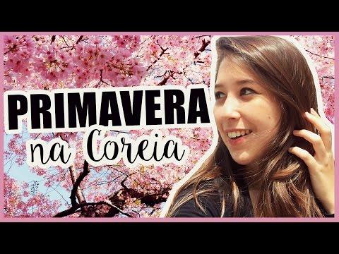 PRIMAVERA NA COREIA DO SUL   Festival Flor de Cerejeira   MIDORI