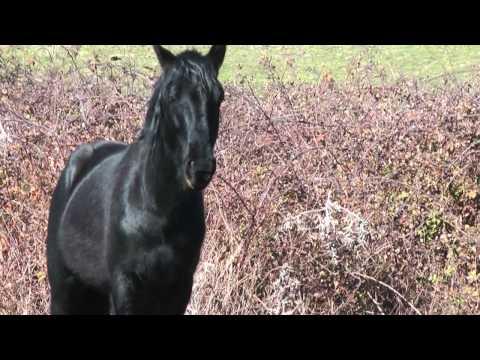 Trekking a cavallo con il certificato di qualità