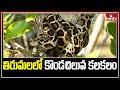 10 అడుగుల కొండ చిలువ.. జనం పరుగులు | Python in Tirumala | hmtv