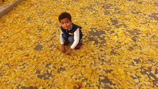 eshaan feeling  happy with beautiful autumn in korea