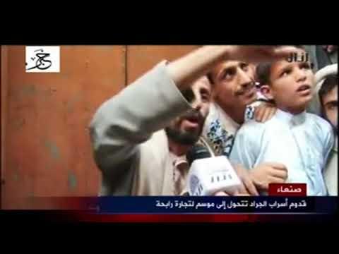 اليمن ... قدوم اسراب الجراد تتحول الي موسم لتجارة رابحة