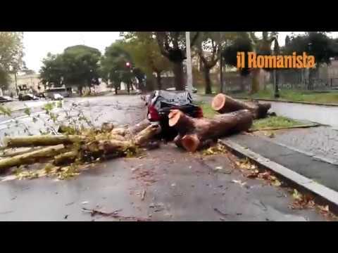VIDEO - Raffiche di vento e alberi abbattuti: i danni del maltempo a Roma