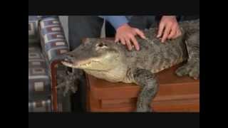 Jeff Corwin & His Animal Friends - 11/18/08