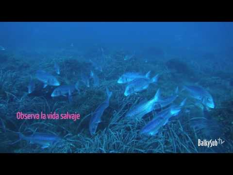 Balkysub Dive Cabo de Palos
