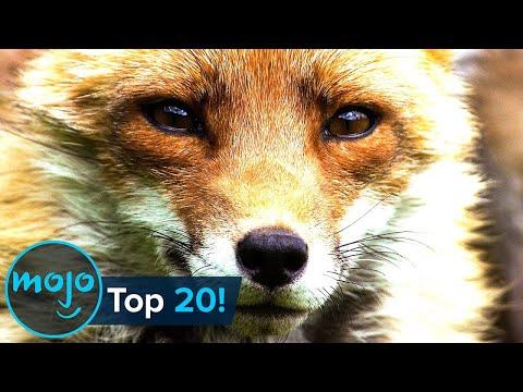 20-те најинтелигентни животни на планетата - Можете да погодите кое е на врвот?