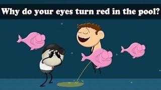 Why do your eyes turn red in the pool? |  #aumsum #kids #science #education #children