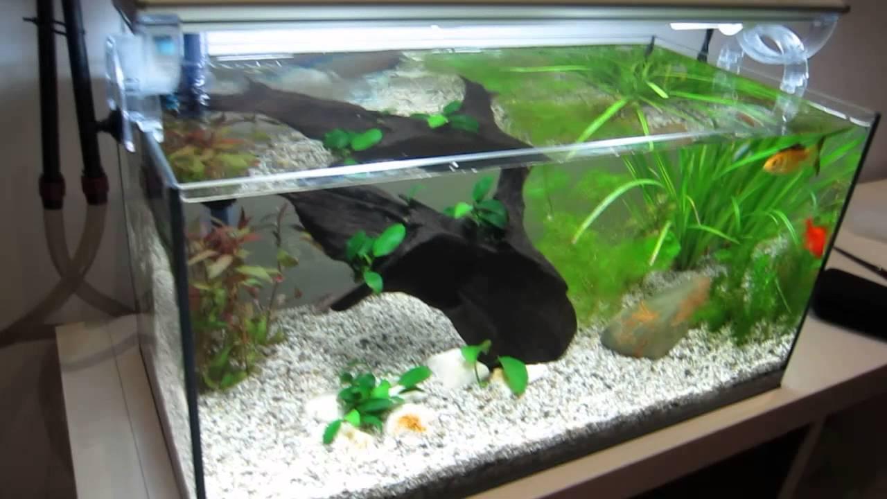 acquario pesci rossi youtube