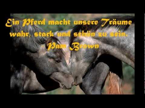 Pferde Zitate Sprüche Zitate Leben