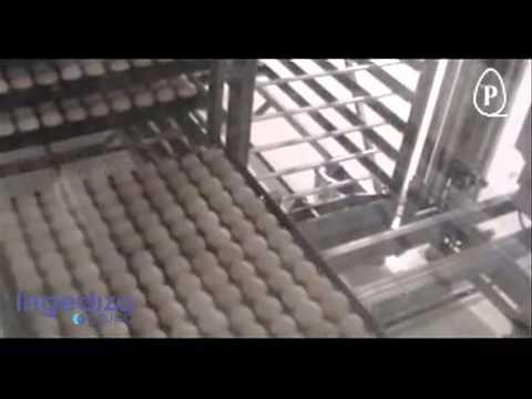 Transferencia automática incubación Prinzen - Grupo Ingediza
