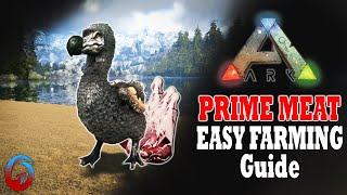 Easy Prime Meat! Ark: Survival Evolved Guide
