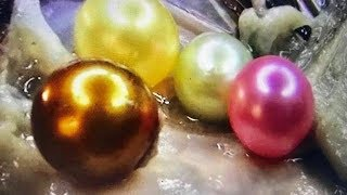 REAL  GOLD PEARL FOUND IN OYSTER DIG IT On FUN HOUSE TV