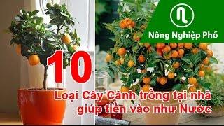 10 Cây Cảnh trồng tại nhà giúp tiền vào như nước