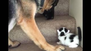 Pet Lovers Must Watch this Video II FUNNY VIDEO II 2016