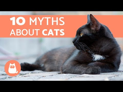 10 Myths About Cats You Should Stop Believing