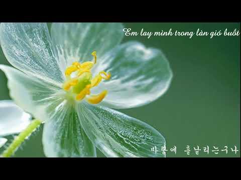 [Vietsub- Lyrics] Jonghyun - Diphylleia Grayi / Skeleton Flower (종현 - 산하엽)