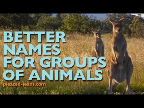 Better Names for Groups of Animals